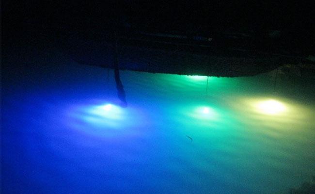 Đèn LED ngầm dụ cá đang là giải pháp tối ưu, hiện đại